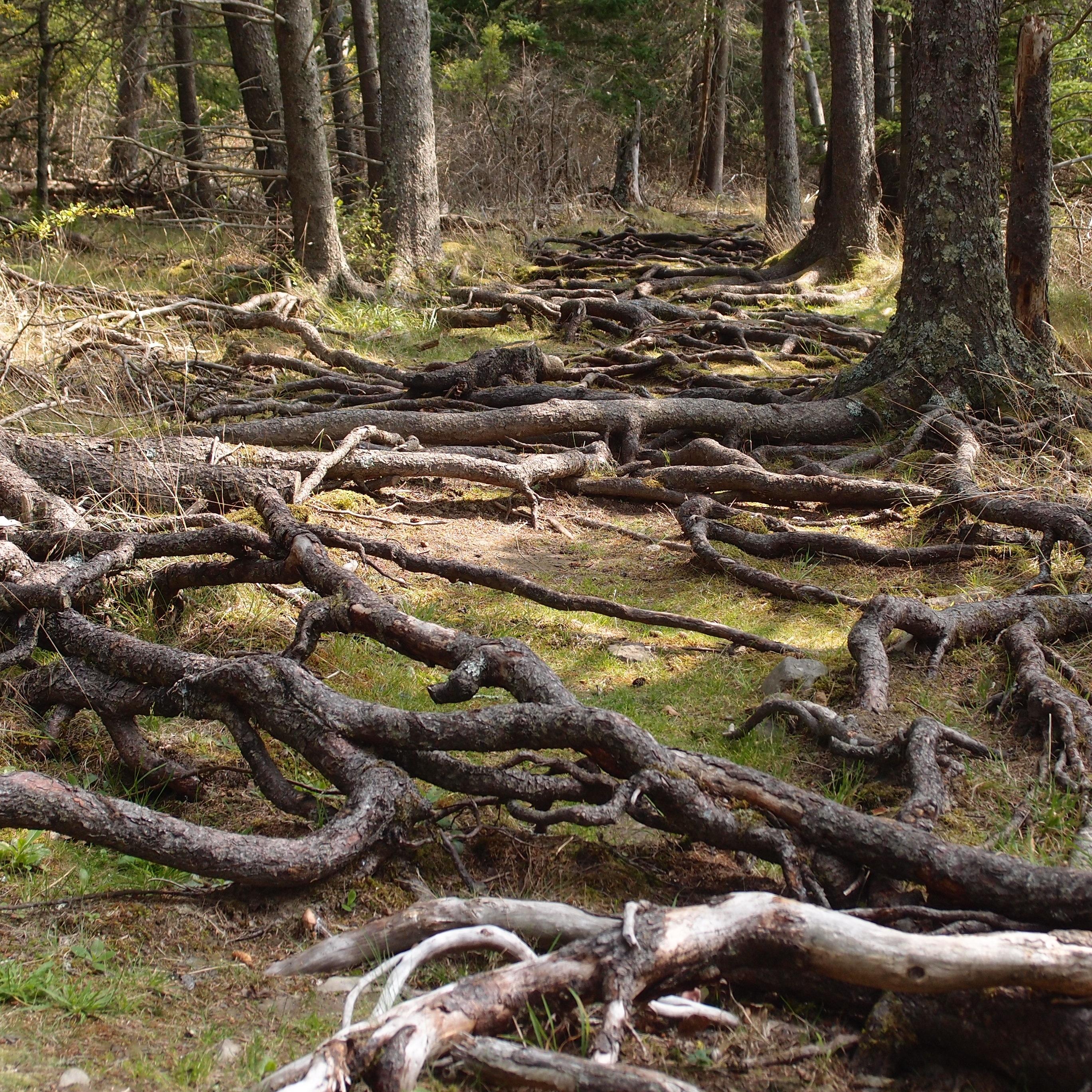 Warren island lulu 39 s musings for What does the word soil mean