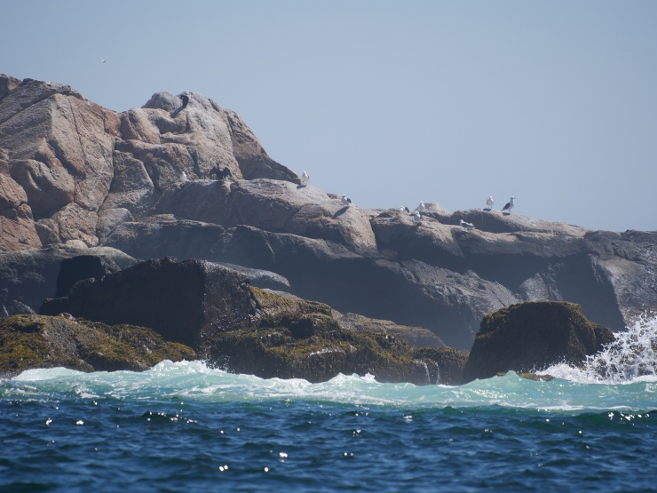 Matinicus Rock