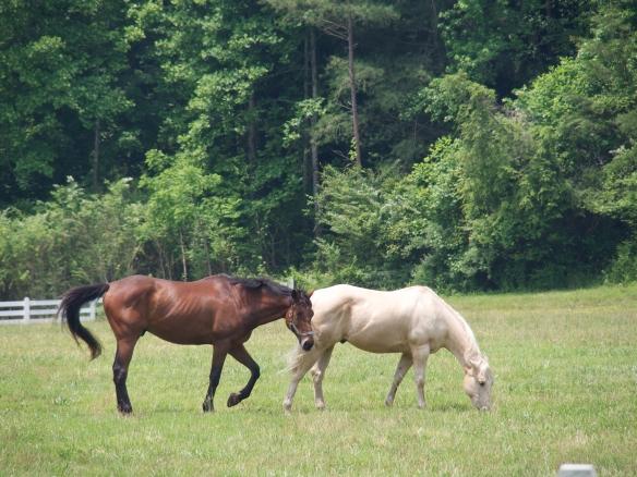 horsesOLYMPUS DIGITAL CAMERA
