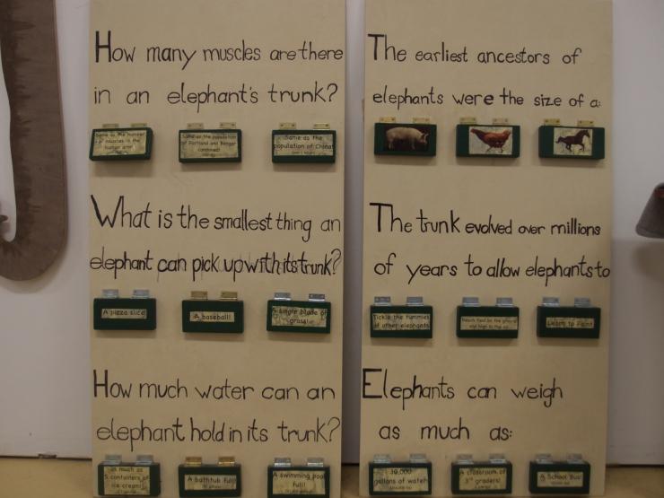 Hope Elephants