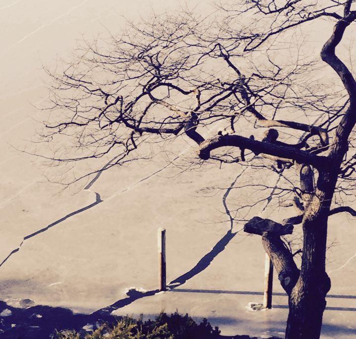 Rockport Harbor/winter