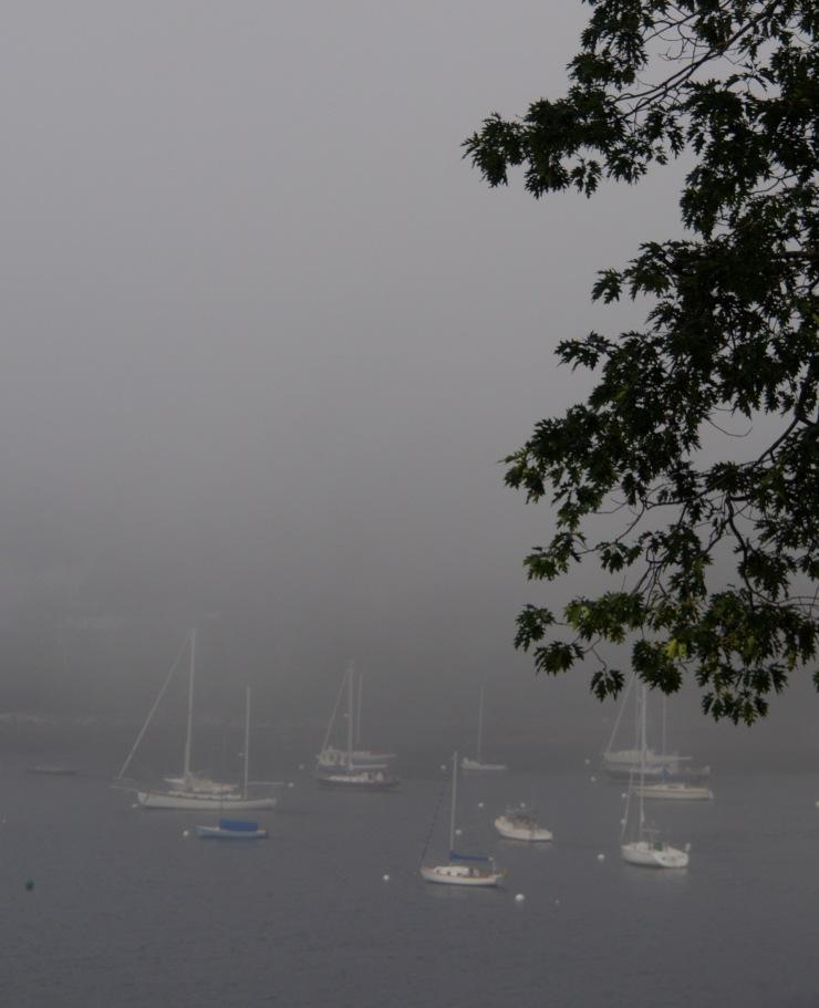 Rockport Harbor/fog