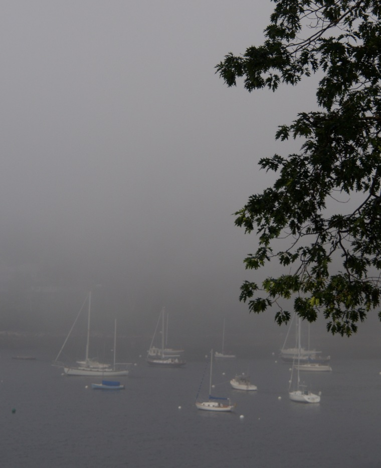 Rockport Harbor/fog